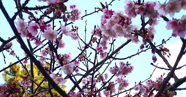 春はそこまで。