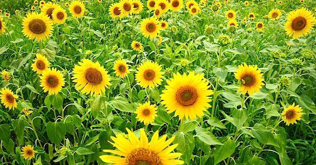 「花の海」