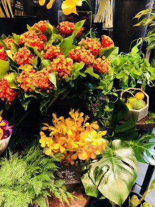 秋の花を買いに銀座1丁目サロンから出かけました。