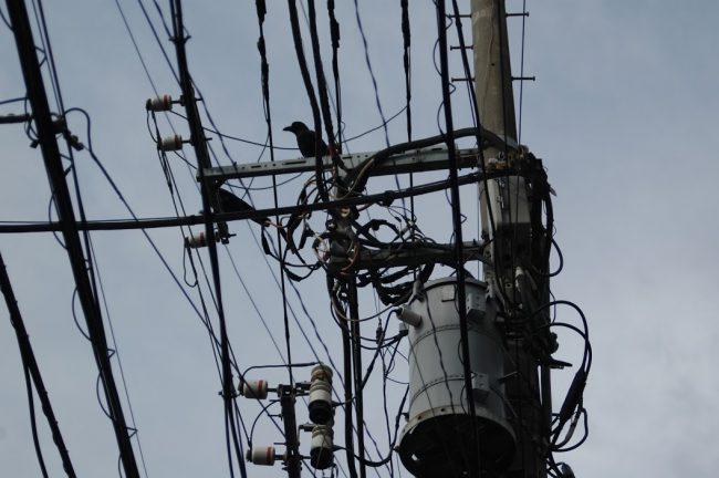 カラスがとまっている電柱に入り組んだ電線