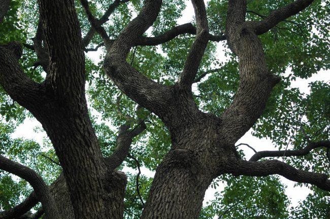 ごつごつした木の根元から空を見上げた写真