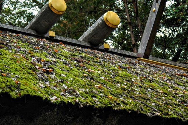 外幣殿の茅葺屋根を撮った写真