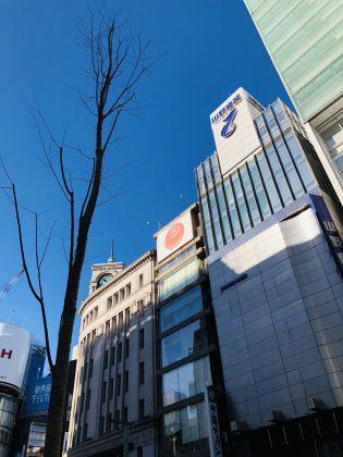 銀座中央通の街路樹が植え替えられています。