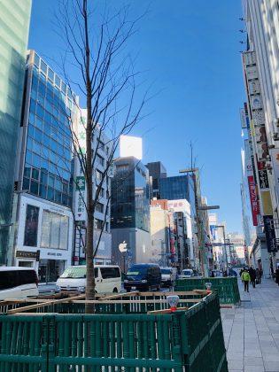 銀座の街路樹の植え替え。