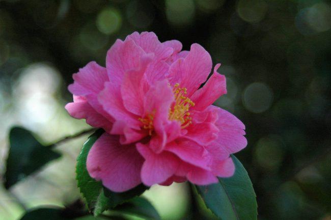 ピンク色の花の写真