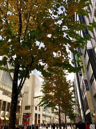 街路樹の葉の色が変わりました。