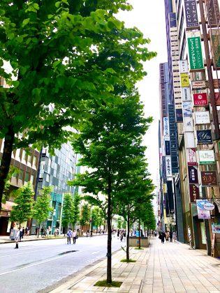 中央通りの並木が育っております。