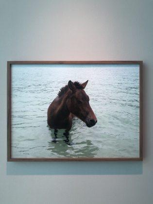 デュマ展での美しい馬の写真作品。