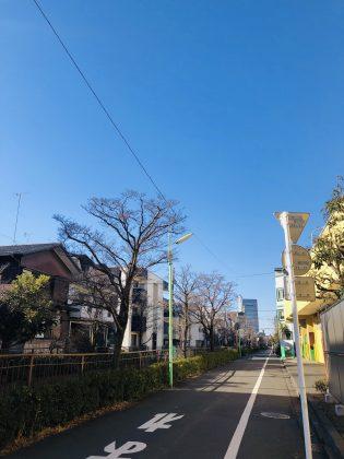 矢沢川の遊歩道は穏やかでした。