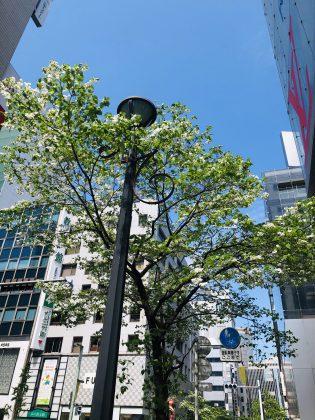 銀座末や通りは花盛り。
