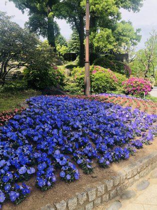 日比谷公園のエントランスの植え込みがきれい。