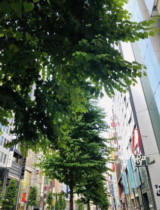 街路樹の成長が楽しみです。
